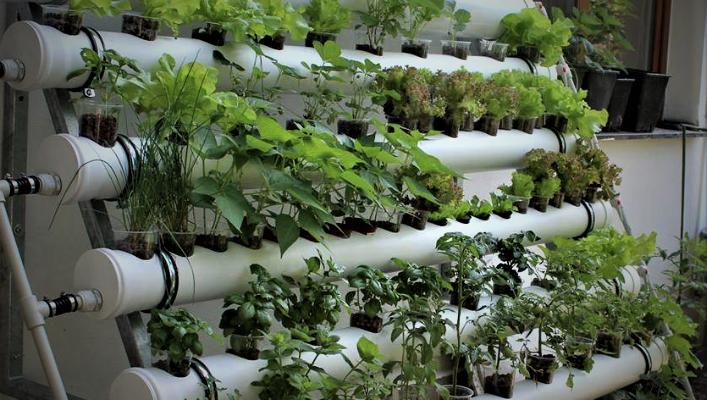 11 cara menanam sayuran organik di rumah untuk pemula